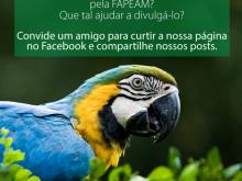 curtidas-face-fapeam8