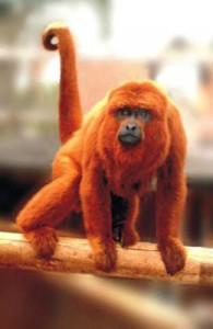 Macaco guariba (Foto: Divulgação)