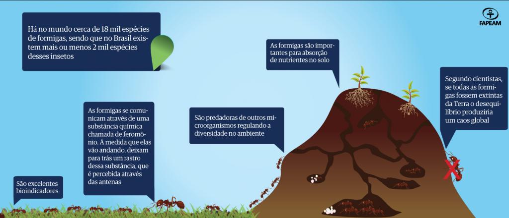 Pesquisa busca entender como formigas se distribuem na floresta amazônica