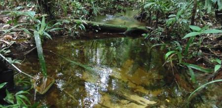 Mudanças climáticas podem alterar cadeias alimentares aquáticas da Amazônia
