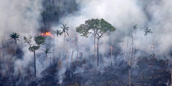 Recorde de queimadas na Amazônia causa perda de biodiversidade