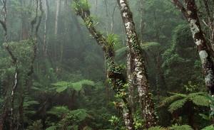 Com apoio da Fapeam, sistema irá gerar informações de previsão climática sazonal para a Amazônia