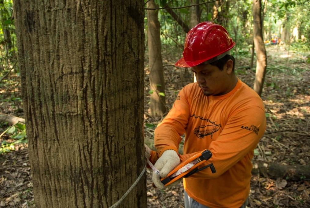 Monitoramento na Reserva Mamirauá gera dados sobre a dinâmica da floresta de várzea