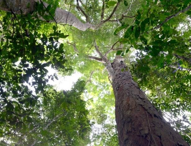 Primeiro censo mundial de plantas revela que mais de 20% estão em perigo