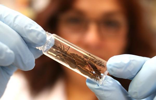 Estudo usa teoria matemática para descrever proliferação da doença de Chagas no Amazonas
