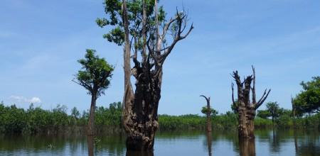 Mudanças climáticas podem levar à exclusão de espécies arbóreas em áreas úmidas na Amazônia