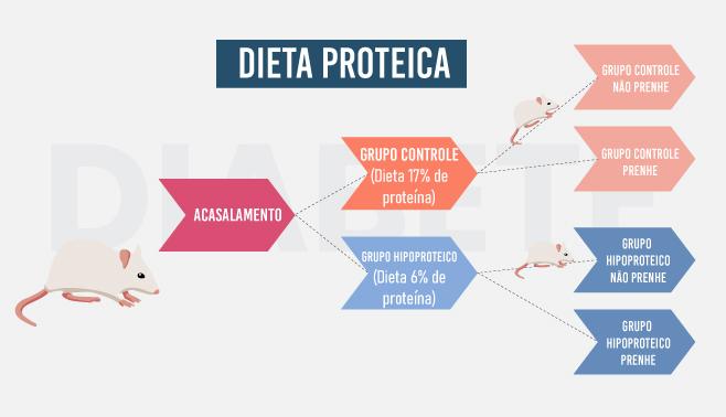 Infográfico---Dieta-Proteica-2 (1)